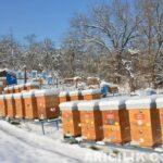 Karda Arı Taşıma