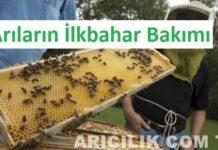 Arıların İlkbahar Bakımı