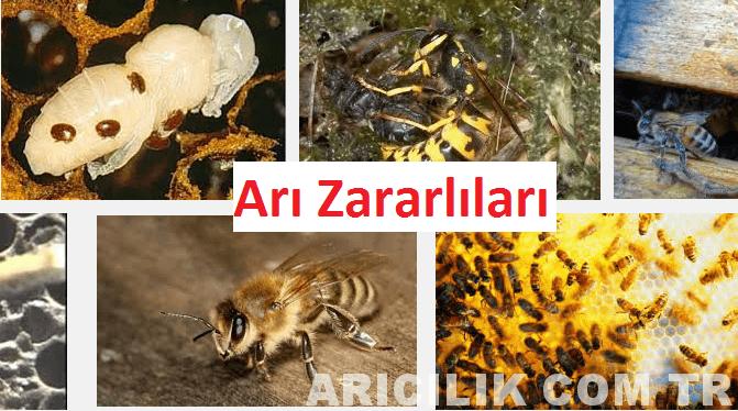 arı zararlıları
