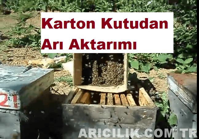 karton kutudan arı aktarımı
