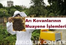 Arı Kovanlarının Muayene İşlemleri
