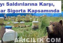 ayı saldırısına karşı arılar sigortalı