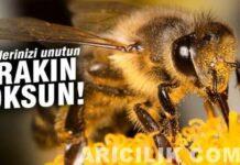 Arı Sokması Zararlı Değil
