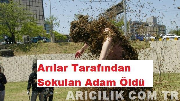 Arılar Tarafından Sokulan Adam Öldü