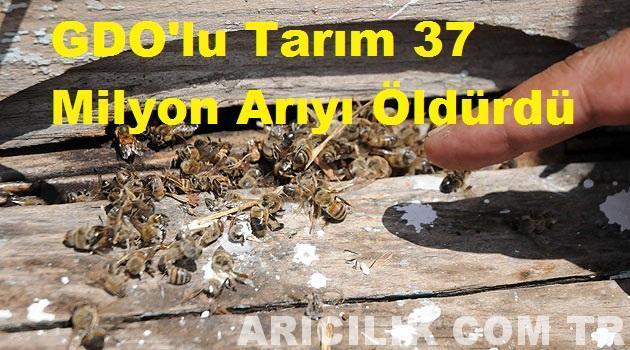 GDO'lu Tarım 37 Milyon Arıyı Öldürdü 1