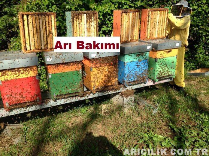 arı bakımı