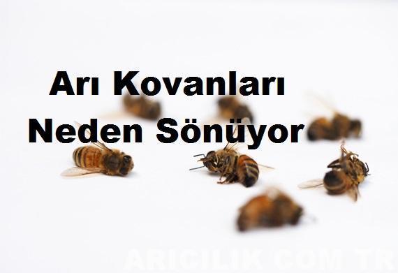 Arı Kovanları Neden Sönüyor