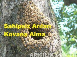 sahipsiz arıları kovan alma