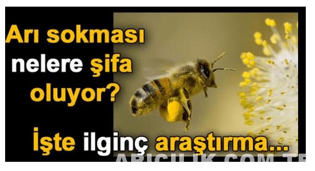 Arı Sokması Nelere Şifa Oluyor