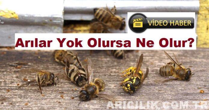 arılar yok olursa ne olur