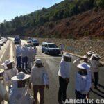 Arı Kamyonu Kaza Yaptı