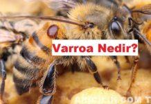 Varroa Nedir
