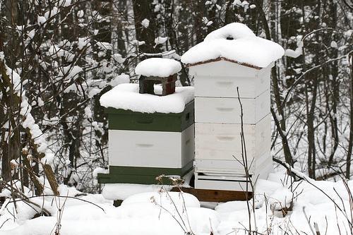 Arılarda Kışlatma Çalışmaları