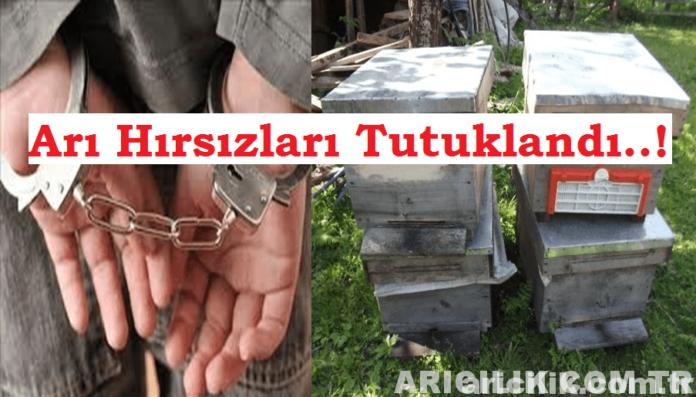 arı hırsızları tutuklandı
