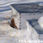 Kışın Arıya Kek Verilir Mi?