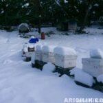 2016 Arıcılıkta Kar Manzaraları