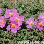 Türkiye'nin Ballı Bitkiler Florası