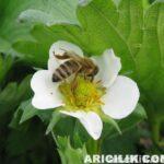 Arı İlaçlama (Arıları İlaçlamayın)