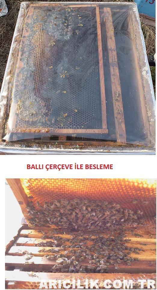 Arıları Besleme Yöntemleri