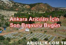 Türkiye'nin En Güncel Arıcılık Platformu