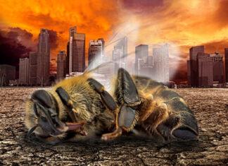 Arı Popülasyonu Dünya Çapında Kayboluyor 2