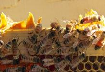 Ziraat Bankası Arıcılık Kredisi Nasıl Alınır