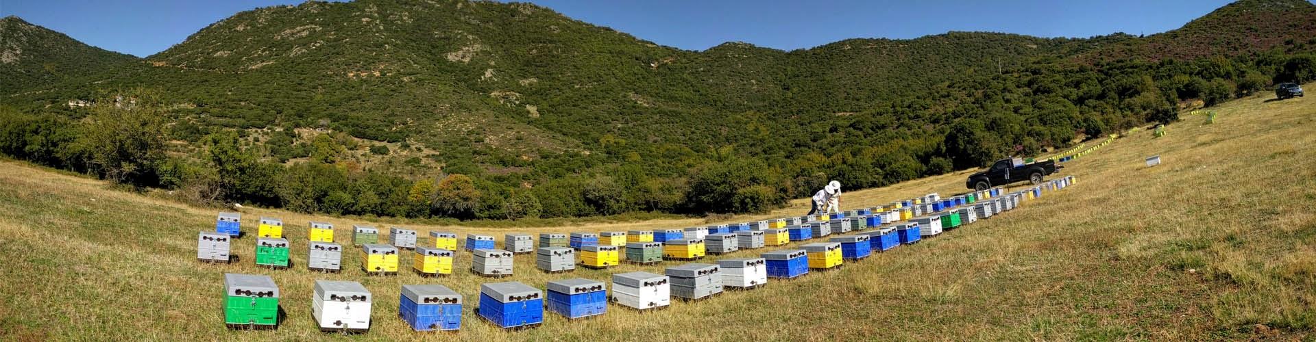 arılar hangi mevsimde bal yapar 1
