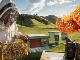 arılar hangi mevsimde bal yapar