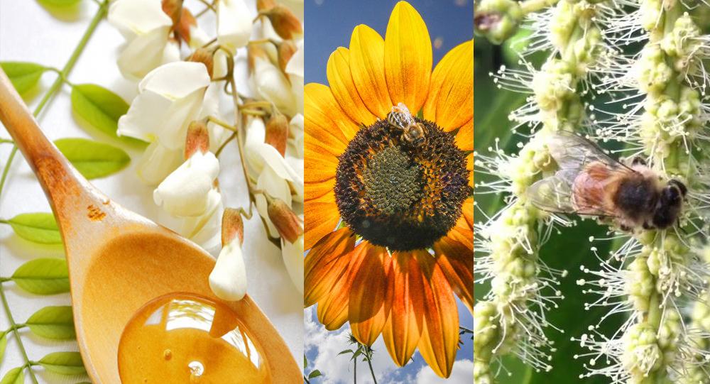 arılar hangi mevsimde bal yapar 3