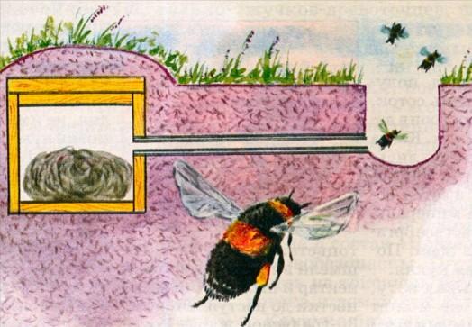 bombus arısı yuvası