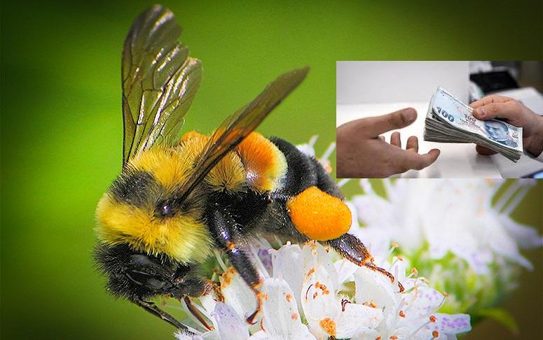 bombus arısına devlet desteği