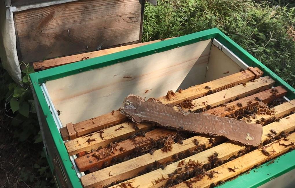 doğal varroa dökme yöntemi sonuçlar