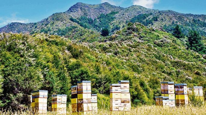 arı kovanı nedir 1