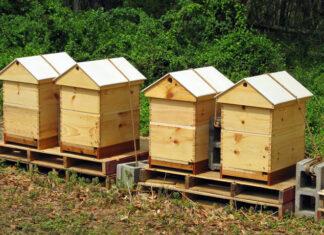 arı kovanı nedir 2