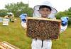 arılar hakkında sunum 3
