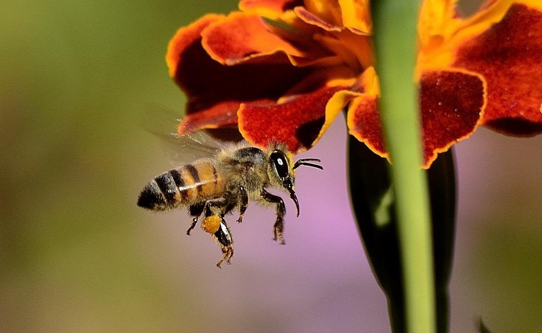 bal arısı hakkında kısa bilgi 2