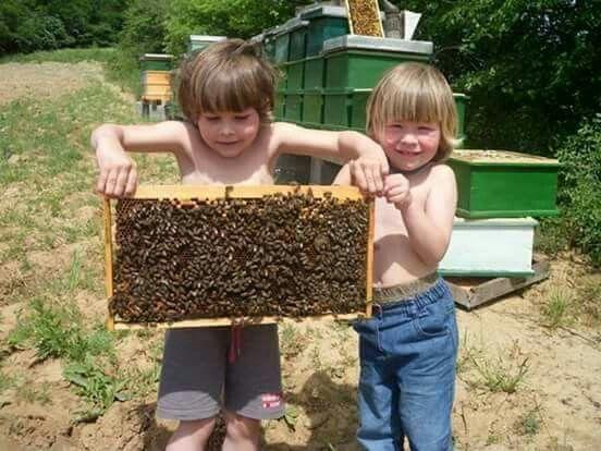 bal arısı hakkında kısa bilgi 3
