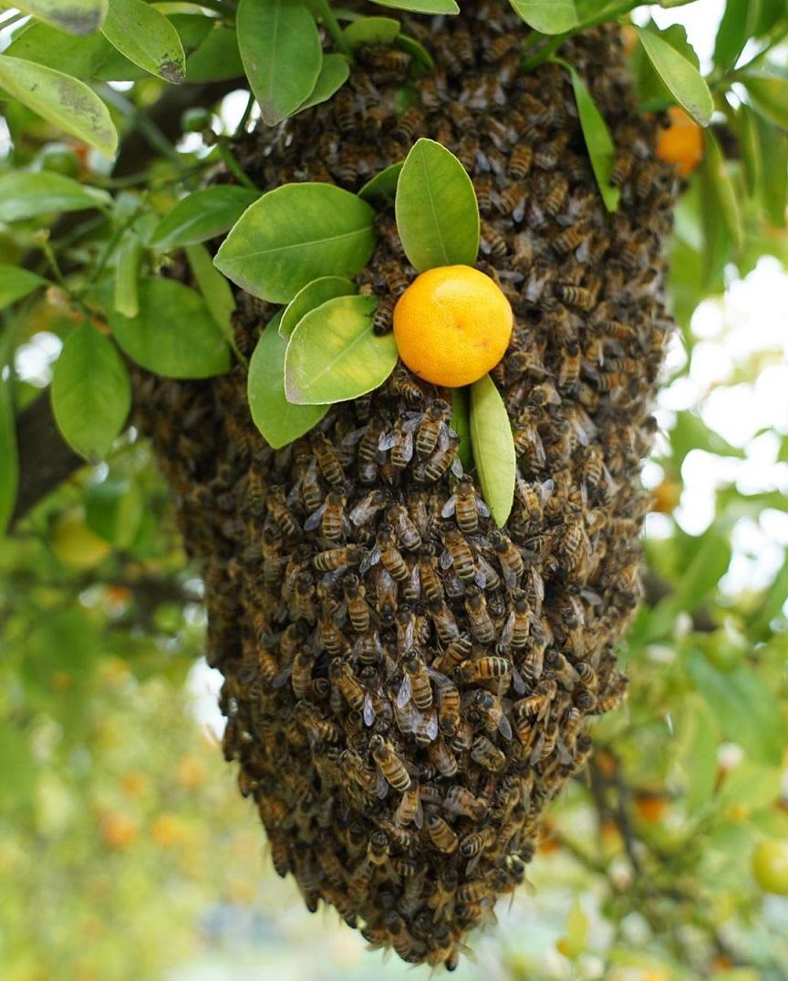 Dünya ve İnsanlar İçin Arıların Önemi 2