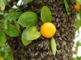 Dünya ve İnsanlar İçin Arıların Önemi 3