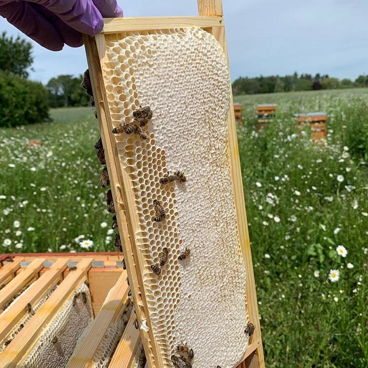 Dünya ve İnsanlar İçin Arıların Önemi 5