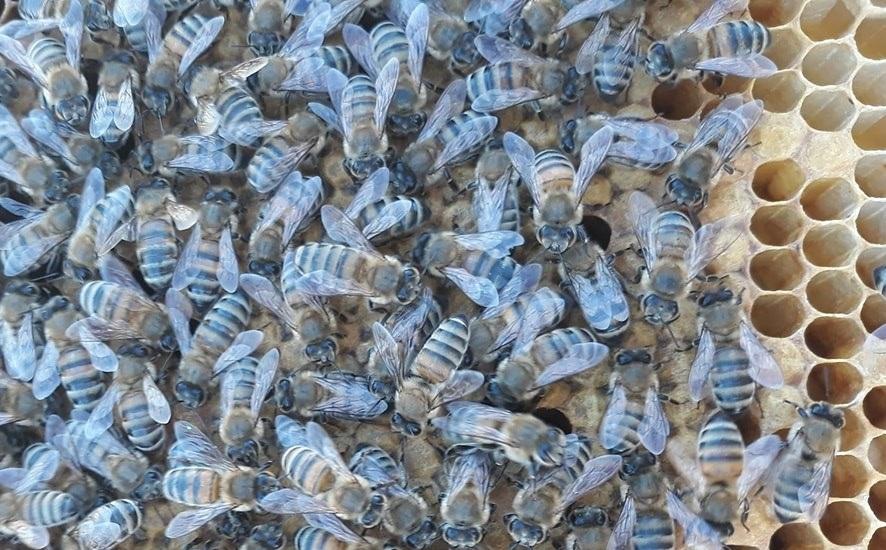 Kısaca Arıların Yaşamı 1