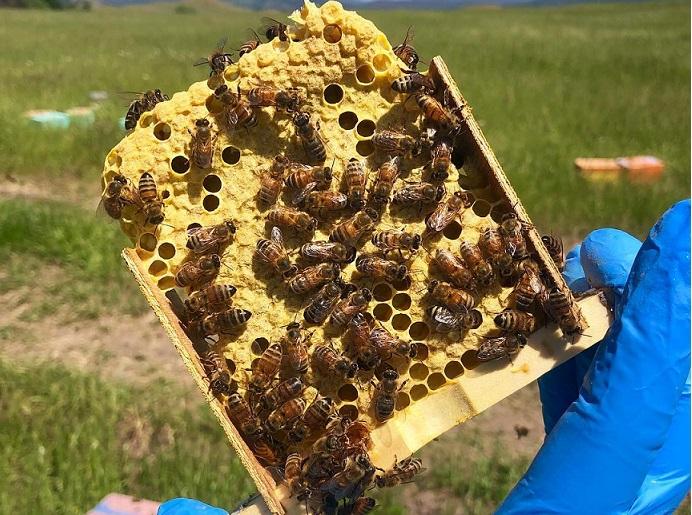 Kısaca Arıların Yaşamı 2