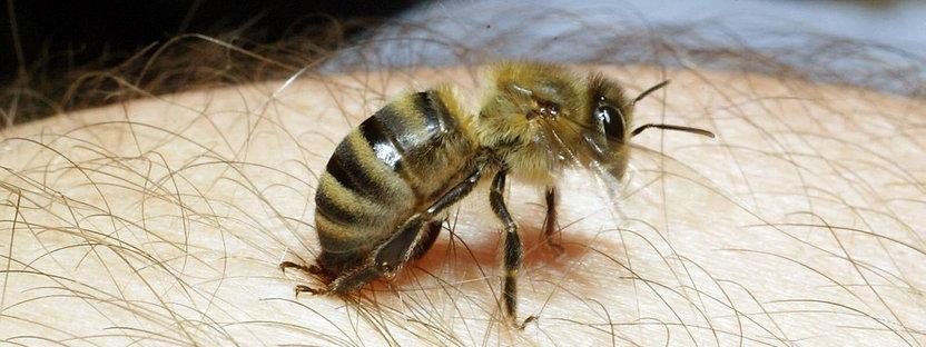 arı zehiri korona 1