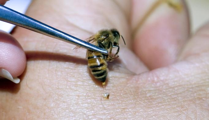 arı zehiri koronaya karşı